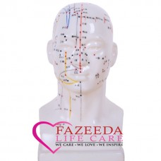 Model Acupuncture Head