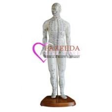 Model Acupuncture